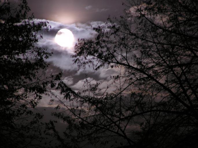 при какой луне лучше клюет рыба